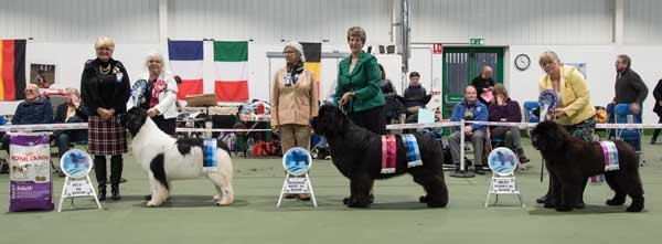 Winners line-up at the 2016 Championship Show