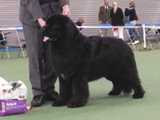 Special Open Dog (Black) winner