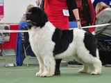 Special Open Dog (White & Black) Winner