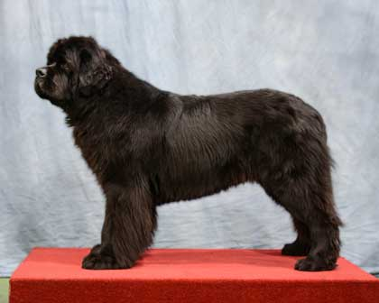 Special Open - Black Dog Winner