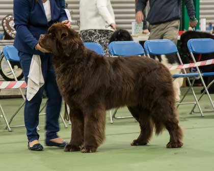 Special Open - Brown Dog Winner