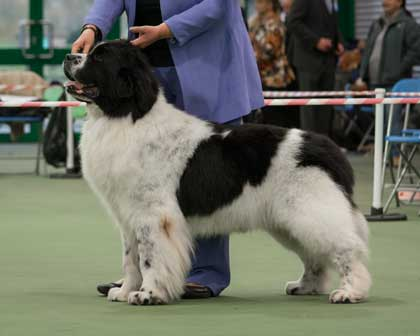 Special Open - White & Black Dog Winner
