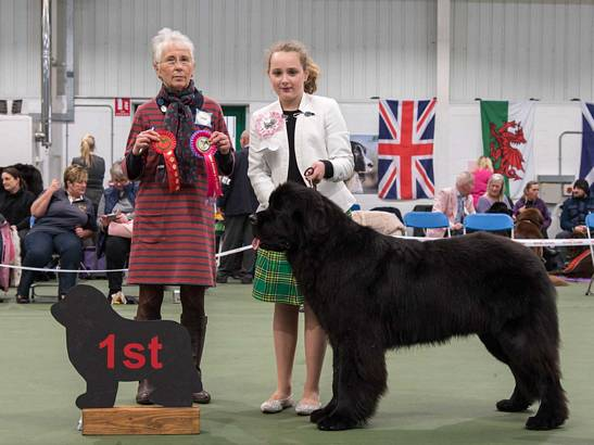 Winner of Junior Handling [6 - 11 Years]