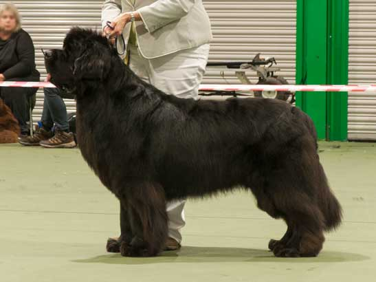Winner of Special Open Black Dog