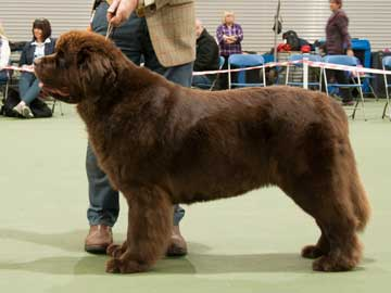 Best Brown in Show