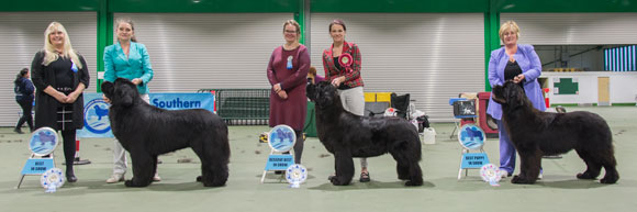 Best In Show winners with show judges