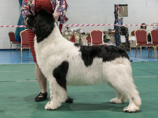 Winner of Special Open White & Black Bitch