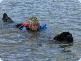 Newfoundland rescuing a swimmer